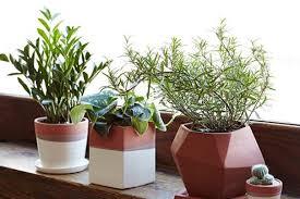 Celebrity Landscaper Ahmed Hassan - Houseplants in Window