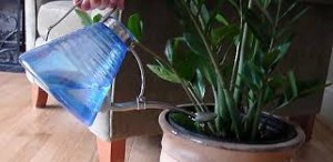 Celebrity Landscaper Ahmed Hassan - Watering Houseplant