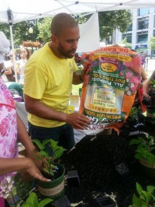 Celebrity Landscaper Ahmed Hassan Bedding Plants