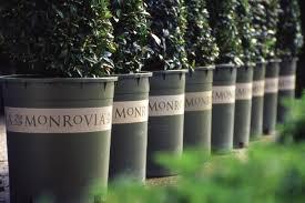 monrovia plants