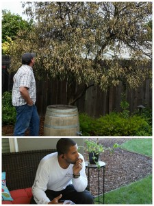 Ahmed Contemplating Orange Tree