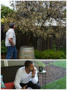 Ahmed Contemplating Orange Tree