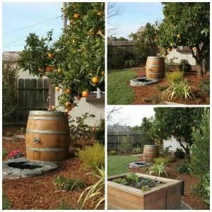 orange tree mashup